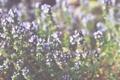 Картинка трава, цветы, растения