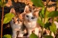 Картинка кошки, природа, фон