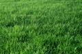 Картинка трава, пейзаж, природа, обои