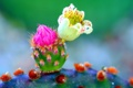 Картинка цветок, природа, растение, лепестки, кактус