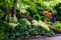 Картинка деревья, парк, дорожка, ступеньки, кусты