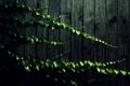 Картинка листья, стена, доски, растение, тень