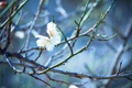 Картинка цветы, ветки, вишня, дерево, весна, цветение