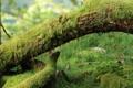 Картинка мох, грибы, трава, дерево