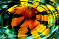 Картинка круги на воде, лепестки, желтый цветок