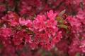 Картинка розовый, лепестки, цветы