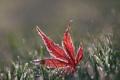 Картинка иней, осень, трава, макро, лист