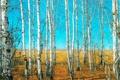 Картинка пейзаж, forest, леса, landscape, woods, Березовая роща, красивая природа