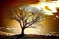 Картинка небо, облака, свет, дерево, холм, зарево