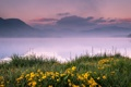 Картинка трава, цветы, горы, озеро, дымка, England, Pooley Bridge
