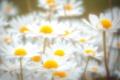 Картинка поле, природа, лепестки, ромашка, стебель, луг