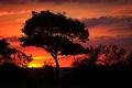 Картинка небо, деревья, вечер, силуэт, зарево