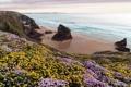 Картинка море, пейзаж, цветы, берег
