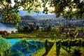 Картинка поле, листья, ветки, город, озеро, сетка, дома