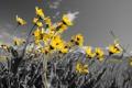 Картинка поле, небо, цветы, луг