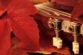 Картинка листья, макро, гитара