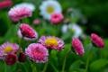 Картинка поле, трава, листья, лепестки, сад, луг