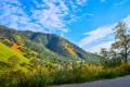 Картинка трава, деревья, пейзаж, цветы, горы, склон, Калифорния