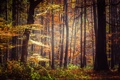 Картинка осень, лес, листья, солнце, деревья, листва