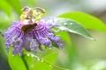 Картинка цветок, макро, бабочка, пассифлора