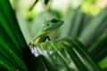 Картинка листья, природа, растение, ящерица