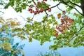 Картинка листья, ветки, желтые, зеленые, красные