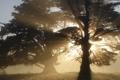 Картинка солнце, лучи, свет, деревья, природа, фон, обои