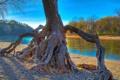 Картинка лес, река, небо, корень, hdr, осень, дерево