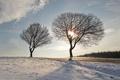 Картинка зима, дорога, небо, деревья, пейзаж