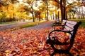 Картинка осень, листья, деревья, парк, птица, скамья