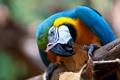 Картинка синий, птица, клюв, попугай, ара