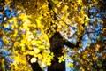 Картинка листья, дерево, боке, осень, october