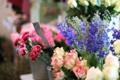 Картинка цветы, розы, гвоздики