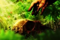 Картинка трава, солнце, рука, Маска