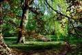Картинка осень, трава, деревья, парк, Гамбург, скамья