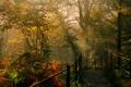 Картинка перила, осень, солнце, Dockray, Англия, кусты, деревья