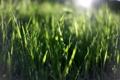 Картинка зелень, лето, трава, солнце, макро, лучи, природа