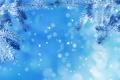 Картинка зима, снег, елочка, макро, иней