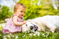 Картинка лето, трава, природа, ребенок, собака, девочка, друзья