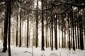 Картинка зима, лес, снег, деревья, природа, фото