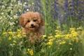 Картинка друг, лето, взгляд, собака