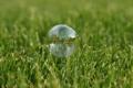 Картинка трава, пузырь, мыльный