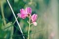 Картинка трава, розовый, горошек, зелёный
