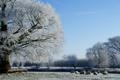 Картинка зима, поле, лес, фото, дерево, овцы
