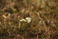 Картинка бабочка, растение, ноябрь, мошка
