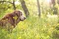 Картинка лето, природа, друг, собака