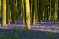 Картинка лес, трава, деревья, цветы, ствол