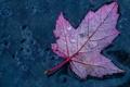 Картинка капли, осень, вода, лист