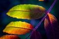 Картинка осень, макро, лист, краски