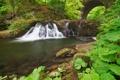 Картинка зелень, лес, река, водопад, Шотландия, Michael Breitung